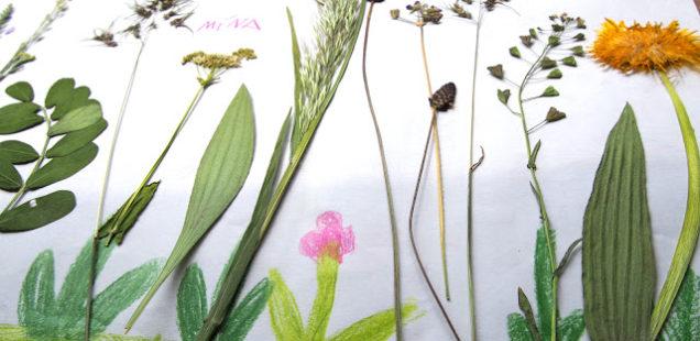 Rastlinkový týždeň Prečítaného leta